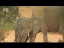 АР В дебрях Африки Сахара Жизнь на гране 2002