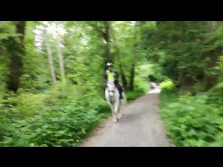 полицейский и его конь Билли