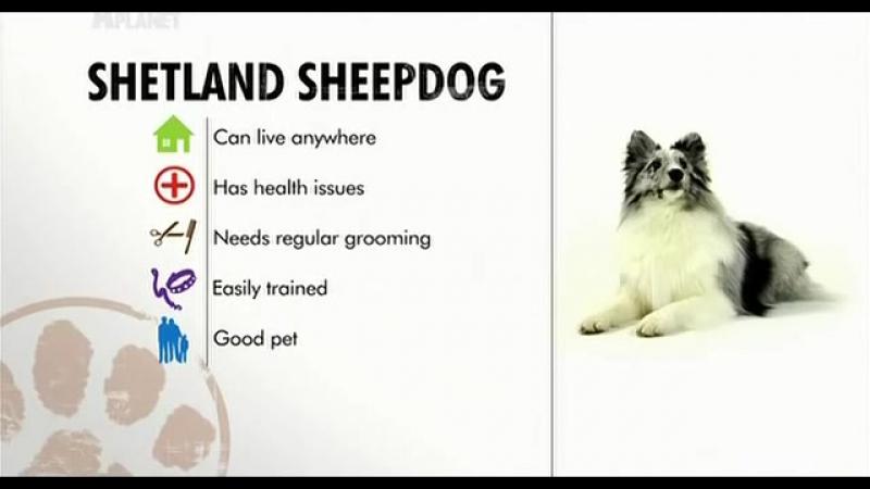 Введение в собаковедение 101 Dogs Часть 20 Animal Planet