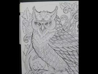 dotwork owl. Пуантель Сова. Анималистика