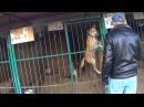 Вольер и кормление (приют для собак Красная Сосна ) АНТУАН НАДЖАРЯН