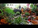 как я ухаживаю за комнатными растениями