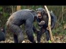 Самое умное животное в мире - Интересные факты