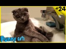 Приколы с котами - ТОПовая подборка Смешные Коты под музыку