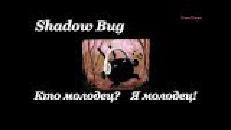 Shadow Bug - Уровни 32-37 - Последний Босс - Главный корпус - Финал