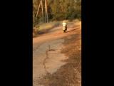 Сын сам за рулем скутера)))