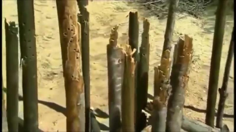 Заряжай с Ли Эрми.MG-42 vs M-60