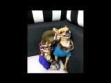 Злая собачка, которая не оценила доброту обезьянки