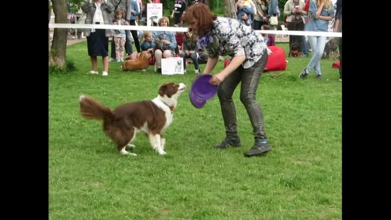 Видео с праздника Собаки в городе