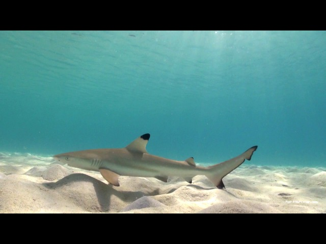 Scuba Diving in Thailand | Koh Tao Dive Site Preview - Aow Leuk