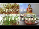 КРЕСС-САЛАТ: 2 способа выращивания. Плюсы и минусы Watercress: 2 ways of cultivation