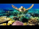 Подводный Мир Атлантического Океана. Азорские острова. Документальный фильм Anima...