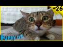 Смешные коты приколы ТОПовая подборка Приколы с котами