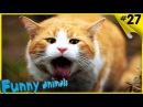 Смешные приколы про животных 2016 ТОПовая Подборка животных