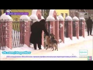 Отлов собак в Щёлковском районе город Монино