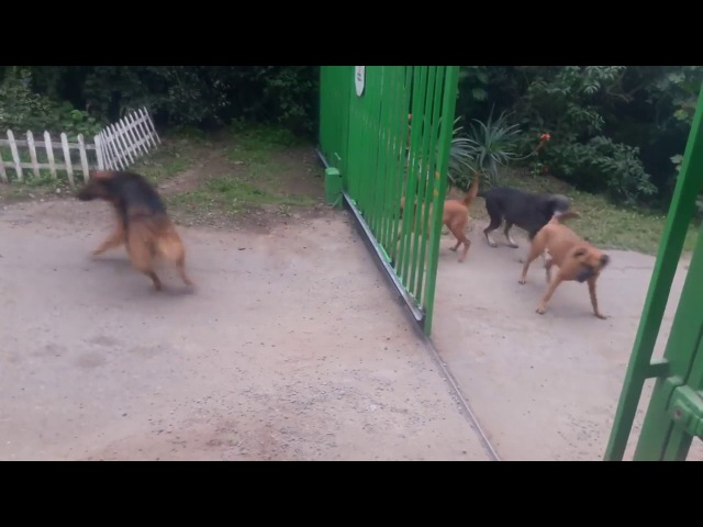 Dogs don't really want to fight.