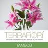 TerraFiori Тамбов