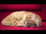Tired cats - Wake up call by Volkswagen