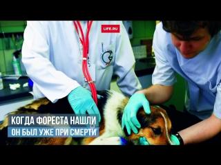 Пользователи сети скинулись на новые лапы собаке, угодившей в медвежью ловушку