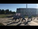ССО Ударник танец Вне закона Атомфест 2017