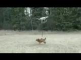 Дрон понес собаку птенцам