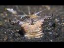 Nat Geo Wild Самое странное место в океане Документальный фильм National Geographic