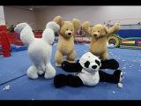 GYMNASTICS IN GIANT TEDDY BEARS!