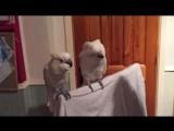 Уматный попуган