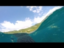 Купание с китовыми акулами, Филиппины Себу