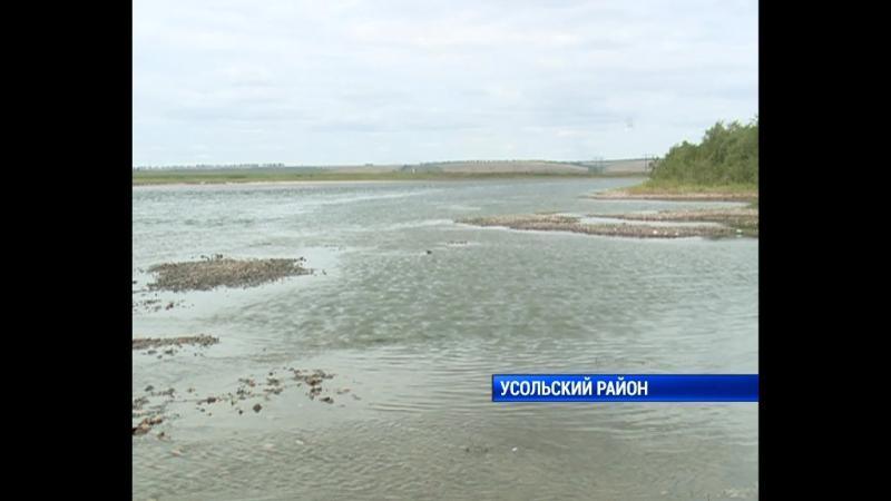 Байкальский омуль в Братском море