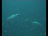 Экскурсия под водой с аквалангами