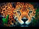 """Документальный Фильм - Бразилия опасные животные """"Хищники убийцы"""" (В мире животн ..."""