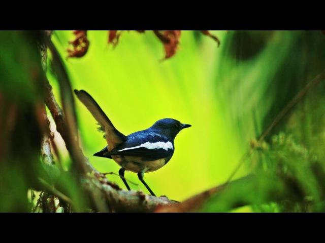 Эта музыка хорошо поднимает настроение. Пение птиц, фортепиано и скрипка