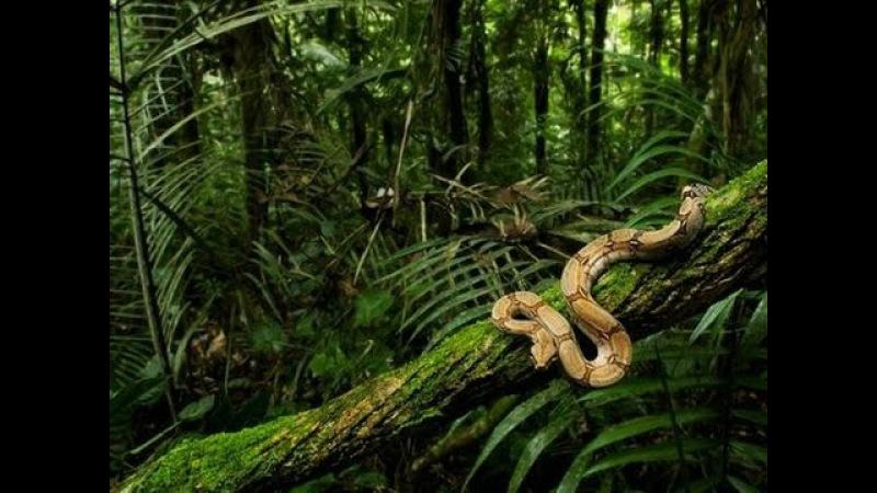 Дикий мир животных Бразилии. Документальный фильм Discovery.