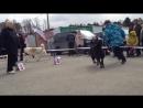 Моно САО КЧК 7.05.17 Сургут-Югория