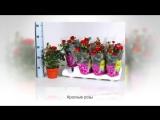 Комнатные растения-талисманы для всех знаков зодиака. Все серии подряд Ч.1