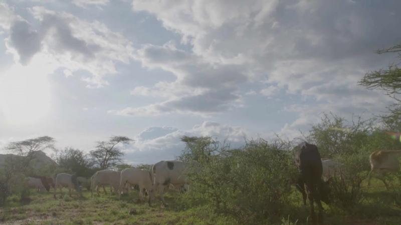 Дикая природа VS люди - National Geographic везде и для каждого