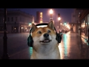 WHEN DOGE PLAYS CSGO! BEST OF DOG MOMENTS