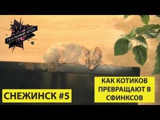 Снежинск #5 | Как котиков превращают в сфинксов