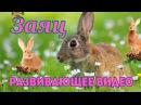 Заяц. Развивающее видео для детей.