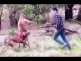 В Австралии мужчина подрался с кенгуру, чтобы спасти свою собаку — видео