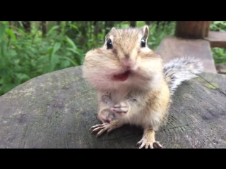 Жадный крыс 🐀