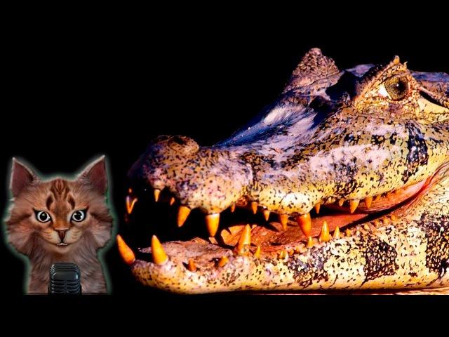Наука для детей Животные | Крокодилы | Мир животных Хищники