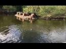 Татьяна Африкантова в Перископе 23 05 2017 Марина летит на Сейшелы в самолете с Ирин