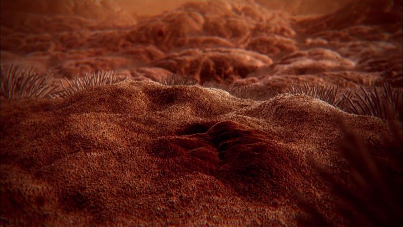 Внутри человеческого тела (2011) мир