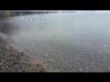 Сезон туманов и дождей
