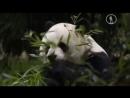 Самые милые животные в мире. Документальный фильм.