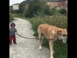 Пёс гуляет с ребёнком
