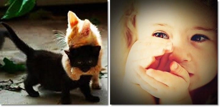 Котенок или ребенок - кого любить больше?