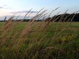 ветер играет травой